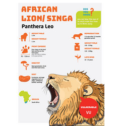 Animal infographic lion vector
