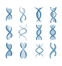 dna icons genetic biology human structure medical vector image