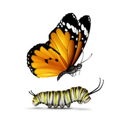 Plain tiger butterfly and caterpillar vector