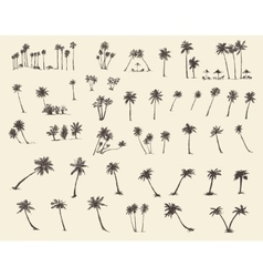 Silhouette Palm Trees Sketch vector image