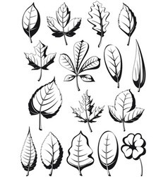 silhouette plant leaves leaf vector image