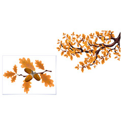Yellow autumn branch a large oak with acorns vector