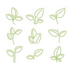 Set of green leaves design elements vector image vector image