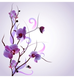 card with orchid branch vector image vector image
