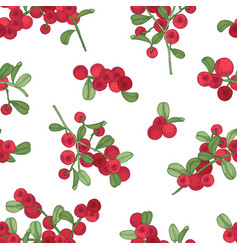 seamless pattern with arctic lingonberry on white vector image