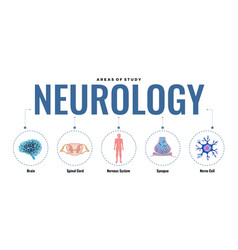 studying neurology infographic composition vector image