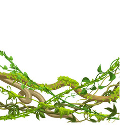 twisted wild lianas branches background vector image