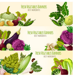 Vegetables and fresh veggies banners set vector