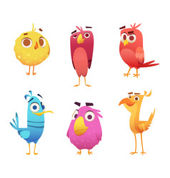 angry cartoon birds chicken eagles canary animal vector image