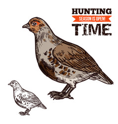 Grouse wild forest bird hunting season prey vector