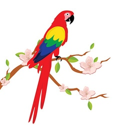 Macaw parrot on tree vector image