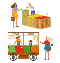 Woman at market buying fresh ripe apples vector