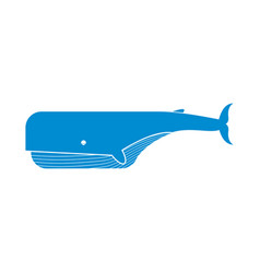 keith isolated large sea mammal on white vector image