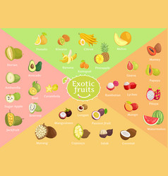 Exotic fruits collection color vector