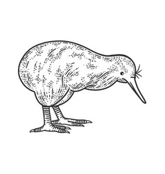 Kiwi bird sketch vector