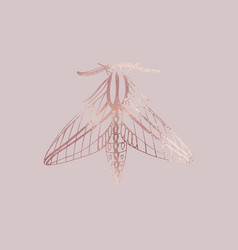 Moth rose gold texture elegant vector