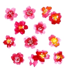 Collection of watercolor camellia flowers vector image vector image