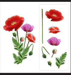 Set of colored mosaic poppies on white background vector
