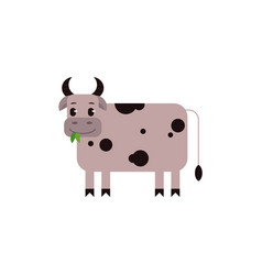 cow with black spots chewing green leaves in flat vector image