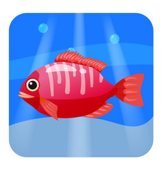 Cute beautiful red tropical fish on sea vector