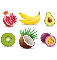 exotic fruits- pomegranate kiwi coconut banana vector image