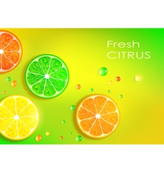 orange lemon lime and grapefruit vector image