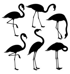 Set of black flamingos vector