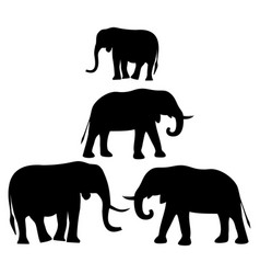 Silhouettes of african elephants vector