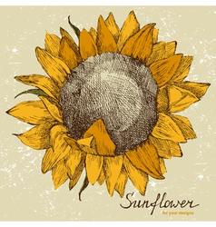 sunflower fower vector image