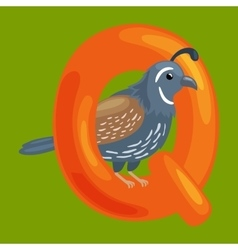 Letter q with animal quail for kids abc education vector
