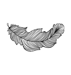 Decorative isolated feather vector