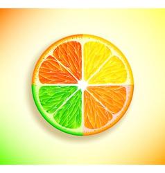 Lemon orange lime and grapefruit vector