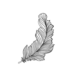 Decorative isolated feather vector image