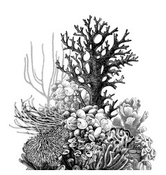 hand drawn coral reef vector image