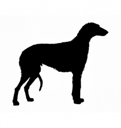 Scottish deerhound vector image
