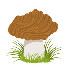 Morel edible forest mushroom colorful cartoon vector