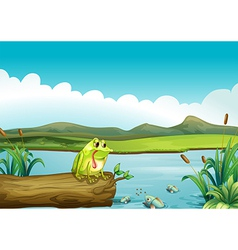 The lonely frog vector image vector image
