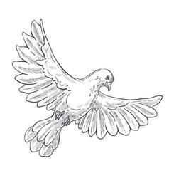 dove or pigeon isolated sketch bird in flight vector image