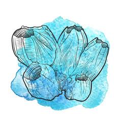 Hand drawn barnacle vector