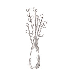 Hand drawn willow branches in the vase vector