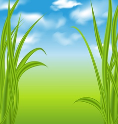 Nature background with green grass and sky vector image vector image