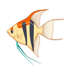 Freshwater angelfish fish on a white background vector