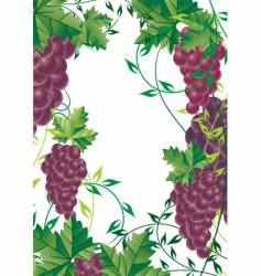 Grape vine design vector