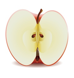 Half red apple vector image
