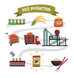 Infographic template of rice production from vector
