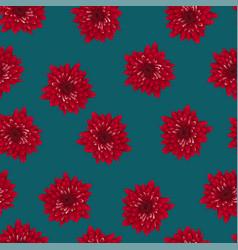 red chrysanthemum on indigo blue background vector image