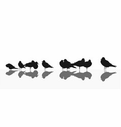 seagull mixed colony on white vector image