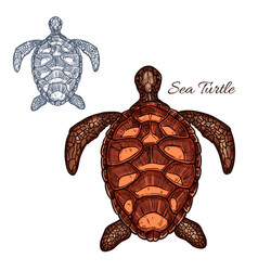 sea turtle isolated icon vector image vector image