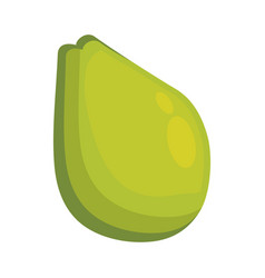 Avocado fresh vegetable vector