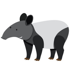 Cute tapir standing on white background vector